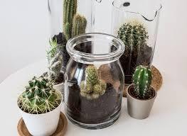 cactus ikea u2026 pinteres u2026