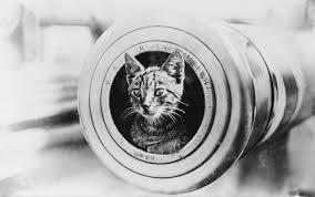 a ship u0027s cat unsung heroes of the sea part 2