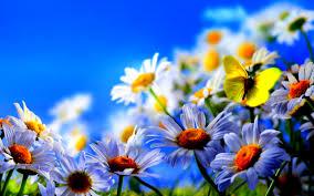 spring flowers butterflies background hd simply wallpaper just