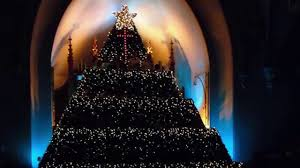 the living christmas tree at st andrew u0027s presbyterian church in
