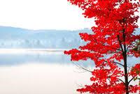 fall autumn leaf colour change happen algonquin