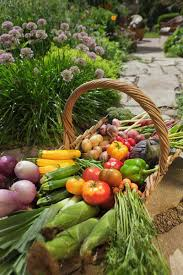 How To Plant Vegetables In A Garden by The Well Fed Garden Feeding Vegetables