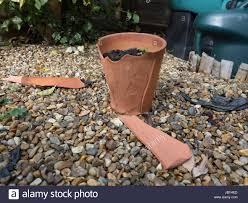 a garden flower pot cracked and broken by winter frost stock photo