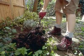Horse Manure Vegetable Garden by Is Manure Safe To Use In Your Vegetable Garden