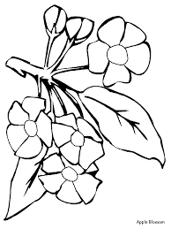 pictxeer search results california poppy coloring pages clip
