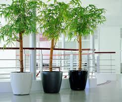 lechuza classico self watering planter metropolitan wholesale
