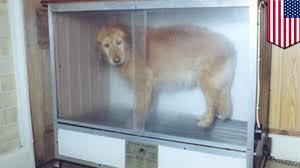dog u0027cooked alive u0027 in shocking petco animal abuse case involving