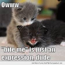 Kitty Meme - bite me is just an expression funny kitty meme