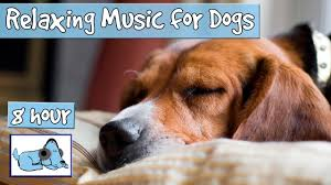 over 8 hours of sleep music for dogs help your dog calm down and