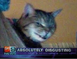 Absolutely Disgusting Meme - absolutely disgusting cat memes