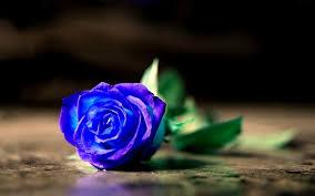 opulenza significato significato rosa significato dei fiori conoscere il