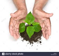 small plant supports small plant growing support human stock photos u0026 small plant