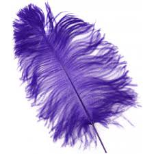 purple feather feathers mardigrasoutlet