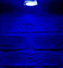 Led Blue Light Bulb by 4w Coloured Narrow Beam Led Gu10 Light Bulb Red Green And Blue