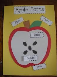 best 25 apple crafts ideas on pinterest apple crafts for