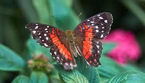 sensational butterflies history museum