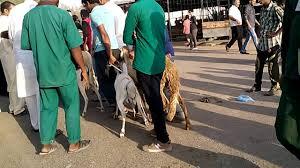 slaughter hauz in qatar da australian lamb somalia lamb qatar