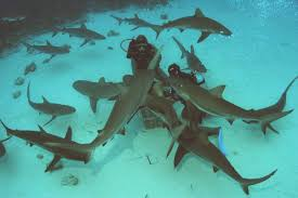 from the office to the ocean let u0027s talk about shark feeding again