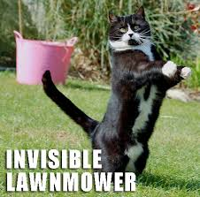 Invisible Cat Meme - jen kenderdine hartman cat pushing an invisible lawn mower comic
