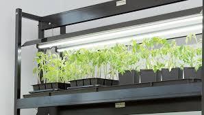 what is the best lighting for growing indoor gardening grow lights gardener s supply