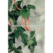 plant trellis plant trellis suppliers and manufacturers at
