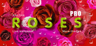 rose theme alpha 3 roses pro live wallpaper apps on google play