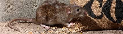 rodent control toledo lucas county health department
