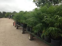 trees u0026 shrubs wholesale plants riley fuzzel farm wholesale