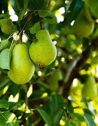 Best Fruit Trees For North Carolina - growing trees for fruit winemaking winemaker magazine