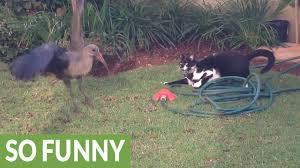 epic backyard standoff between cat and bird youtube