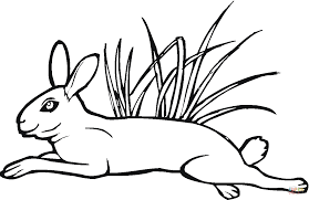 hare jumps on grass coloring page free printable coloring pages