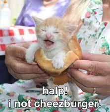 Meme Cheezburger - halp cat meme cat planet cat planet