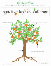all about trees worksheet education