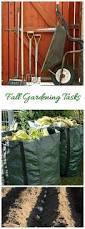 the 25 best clove plant ideas on pinterest planting garlic