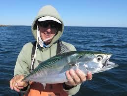 rhode island striped bass