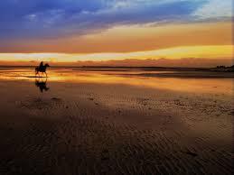 panoramio photo of horse on sunken meadow beach cape cod