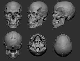 3d Head Anatomy Artstation Anatomy Skull Guzz Soares Reference Pinterest
