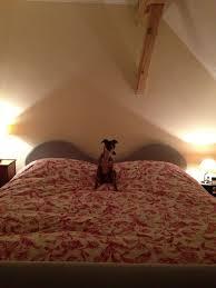 Katze Schlafzimmer Ja Bett Nein Hunde Im Bett U2013 Das Problem U2013 Lumpi4 De Hundemagazin