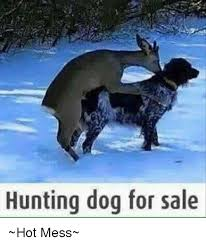 Hot Mess Meme - hunting dog for sale hot mess dogs meme on sizzle