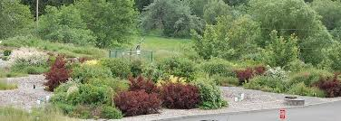 pnw native plants how does your rain garden grow best plants for the pacific