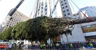 rockefeller center christmas tree arrives in nyc cbs news