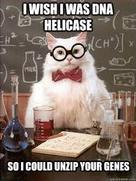 Dna Meme - i wish i was dna helicase cat meme cat planet cat planet