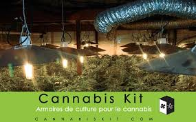 kit chambre de culture cannabis cannabis kit lancement cannabis kit