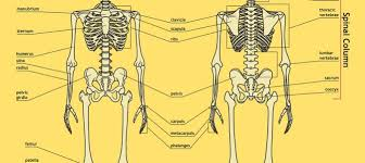 Human Anatomy Worksheet Human Body Coloring Book U2013 Discover The Human Body Through Coloring