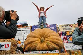 Best Santa Rosa Pumpkin Patch by 1st Woman In 19 Years Wins Half Moon Bay U0027s Pumpkin Weigh Off Sfgate