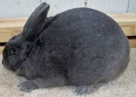 rabbitry backyard basic u0027s