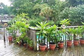 Potted Plants For Patio Plastic Planters In Full Sun
