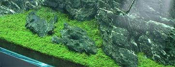 Live Plants In Community Aquariums by The 10 Best Freshwater Aquarium Plants For Beginners Aquascape