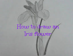 how to draw an iris flower youtube