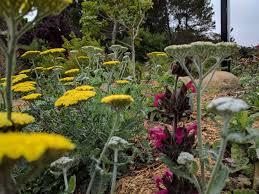 san francisco native plants news